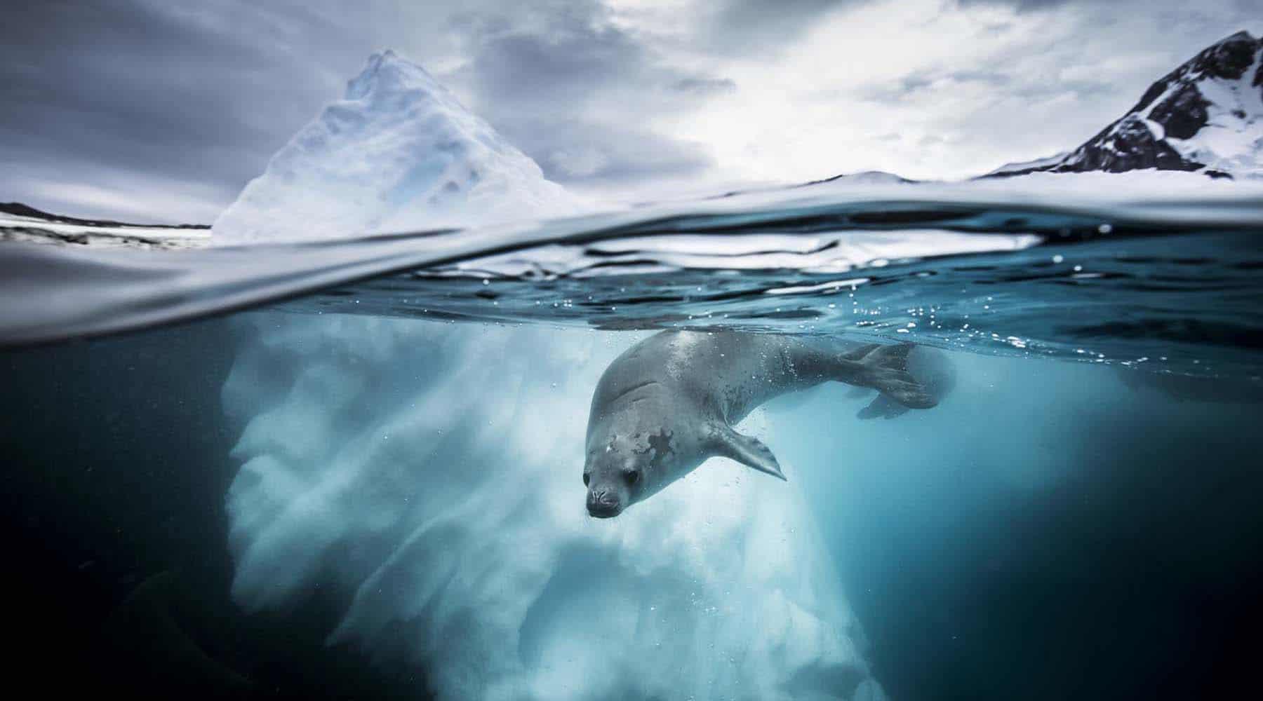 DEEPBLUE-Seal